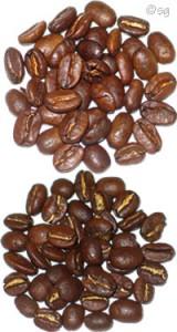 Kaffeebohnen Sorte Arabica