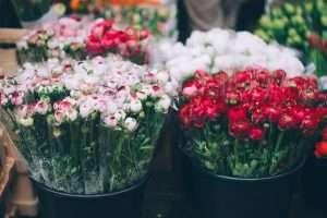 Schnittblumen im Blumengeschäft