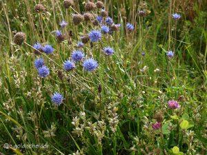 Wildblumen und Blüten