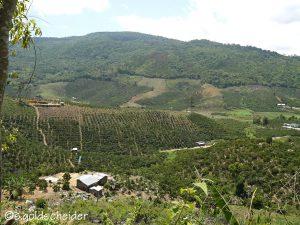 Kaffeeplantagen im Hochland von Vietnam