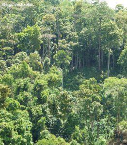 immerfeuchter Wald