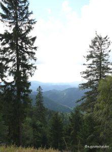 Ausgedehnte Fichtenwälder bedecken die Hochlagen der Mittelgebirge in Mitteleuropa