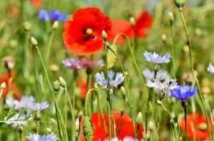 Blumenwiese ©pixabay
