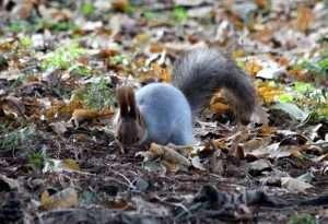 pixabay.com/photos/squirrel-looking-for-funny-cute-2117826/