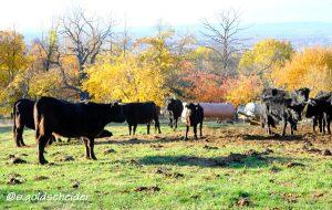 natürliche Düngung beziehungsweise Flächenkompostierung auf der Weide